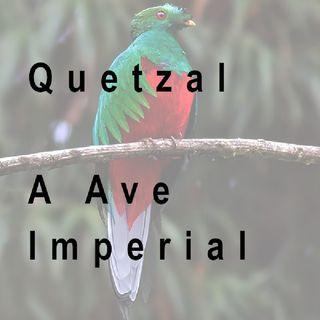 Quetzal - A Ave Imperial (Biologia)