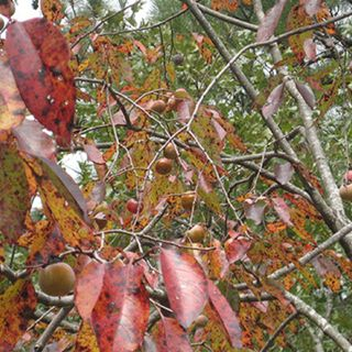 Show 47: The Fall Foraging Show