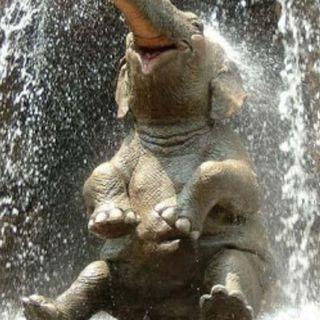 El hijo del elefante, de R. Kipling