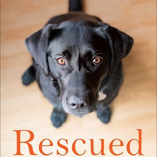 Big Blend Radio: Peter Zheutlin - Rescued:  What Second-Chance Dogs Teach Us About Living with Purpose, Loving with Abandon, and Finding Joy