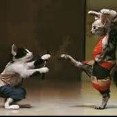 #na Karate: sport o arte?
