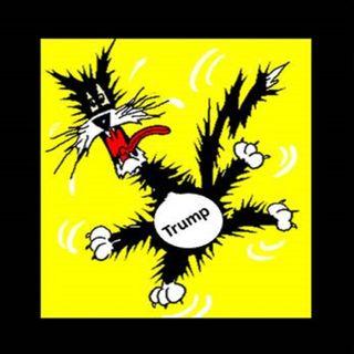 Scaredy-Cat Baby Bone Spurs Dictator Donald J Trump. Sad so sad love #voteblue #bluewave #putinspuppet