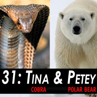 31 - Tina the Cobra & Petey the Polar Bear LIVE!
