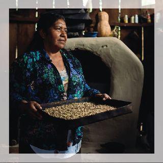 Da dove nasce il caffè? La filiera e come evitare lo sfruttamento dei piccoli produttori