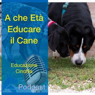 A che Età EDUCARE il cane