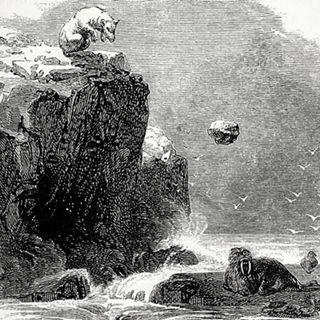 Orsi Polari che Uccidono Lanciando Cose - Etologia & Cultura S.1