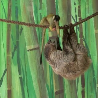 The Monkey and the Sloth