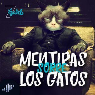 7 Mentiras sobre los Gatos