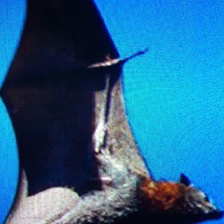 🦇 The BAT Spirit Animal 🦇All About The Bat Spirit