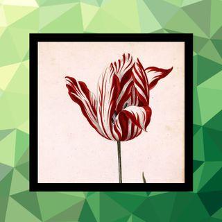 102 - La tulipomanía