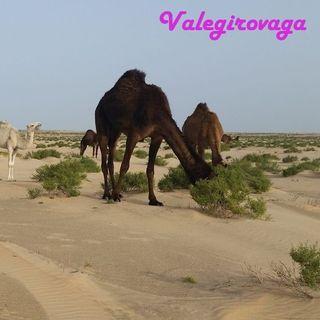 10 KSA Non di solo rose del deserto