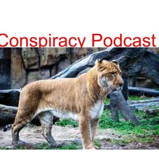 Wavo Conspiracy Theories