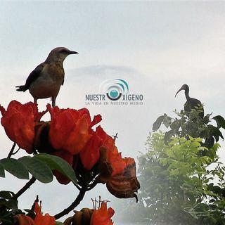 NUESTRO OXÍGENO Primer fin de semana de octubre DÍA MUNDIAL DE LAS AVES