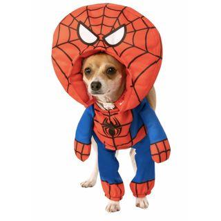 101 - I super poteri dei ragni