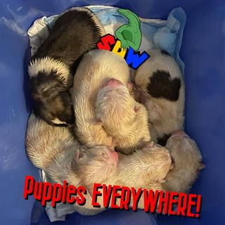 Puppies EVERYWHERE!