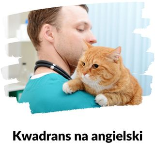 KNA: Lekcja 154 (powtórka ze zwierząt domowych)
