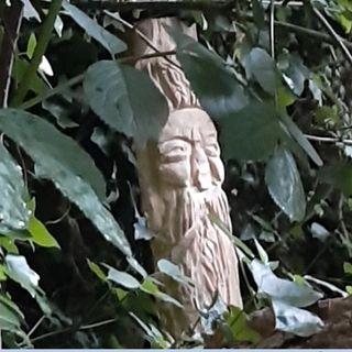 Al via il Simposio di scultura: le opere in legno di sei artisti per animare il bosco del Tretto