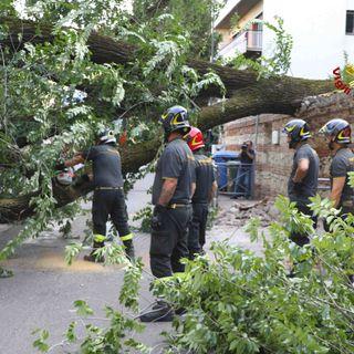 Al via in città il reimpianto di 150 alberi dopo lo schianti della scorsa estate