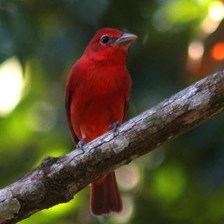 La migración de las aves- Bird migration