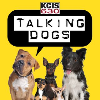 Talking Dogs on KCIS