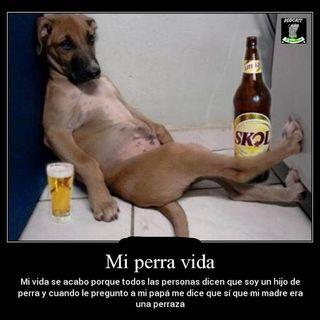 En mi perra vida !!!
