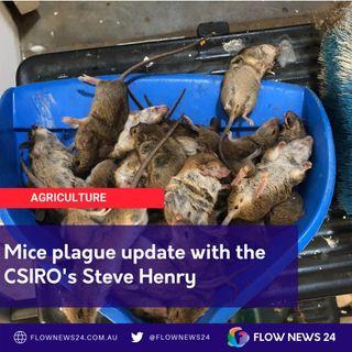 Mice plague update with CSIRO's Steve Henry