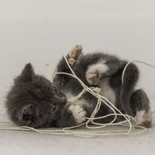 The Kitten Kong Show: Strings.