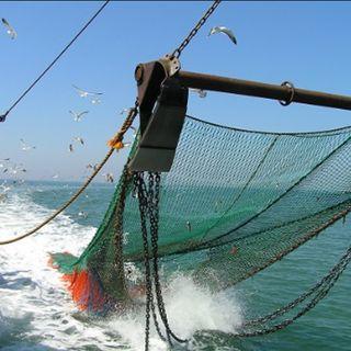 El futuro de la pesca nacional depende de los consumidores
