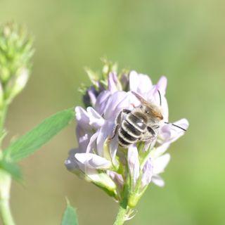 4. Pszczoły w mieście