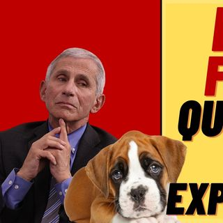 Did FAUCI Fund Puppy Medical Experiments?