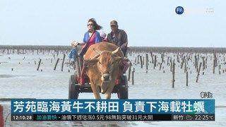 13:19 海牛文化節登場 9隻黃牛遊行好熱鬧 ( 2019-03-30 )
