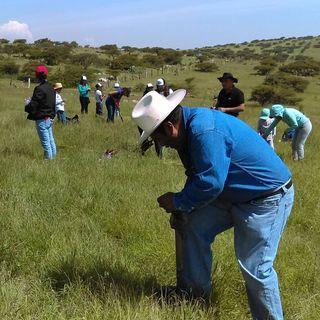 500 mil hectáreas reforestadas por programa Sembrando Vida: AMLO