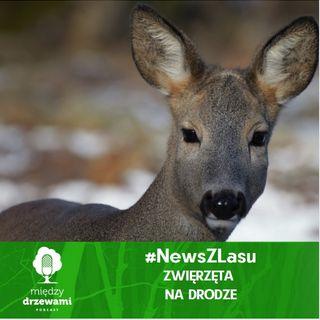 #News z lasu - Zwierzęta na drodze