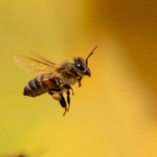 Un milione di firme per una legge salva api