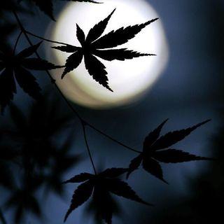Datos Interesantes Sobre La Marihuana