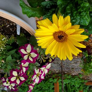 3 Ways to Create a Happy Flower Container That Lasts All Summer - DIY Garden Minute Ep. 153