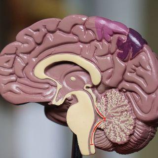 Dott. Manera: «L'intestino è il nostro secondo cervello»