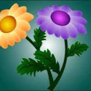 La leyenda del crisantemo - para niños