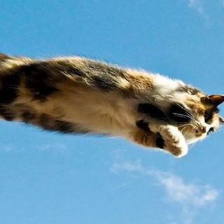 The Kitten Kong Show 783: Flying.