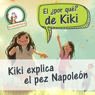 El por qué de Kiki, capítulo cinco: Kiki explica el pez Napoleón