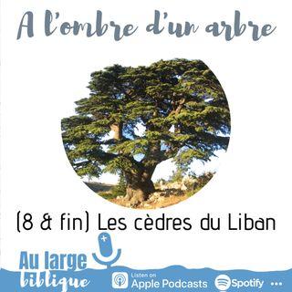 #179 A l'ombre d'un arbre (8 & fin) Les cèdres du Liban