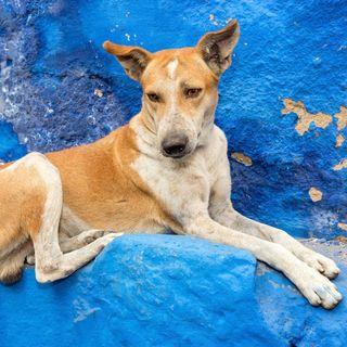 Timbuktu – Ein Hund erzählt sein Leben. Von Paul Auster (2/2)