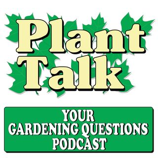 Keeping Your Gift Plants Alive