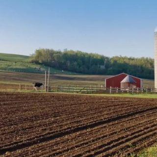 Agricoltura alleata del clima: New York approva la legge sul suolo sano
