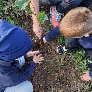 I paladini verdi che regalano nuovi boschi al Veneto inquinato