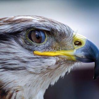 Buongiorno in connessione al falco!