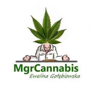 1. Cannabis w pigułce czyli co powinieneś wiedzieć o Marihuanie?