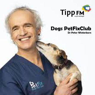 Dr Peter Winterborn talks about Dogs PetFixClub