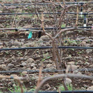 Ep 089: Terroir v. The Winemaker