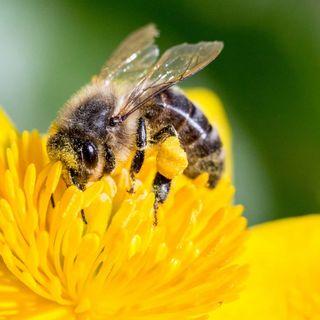 COSE MOLTO AMERICANE- Spelling Bee